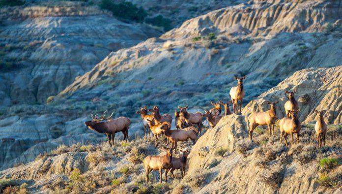 Parque Nacional Theodore Roosevelt: tierra que inspiró a un presidente a crear política ambiental