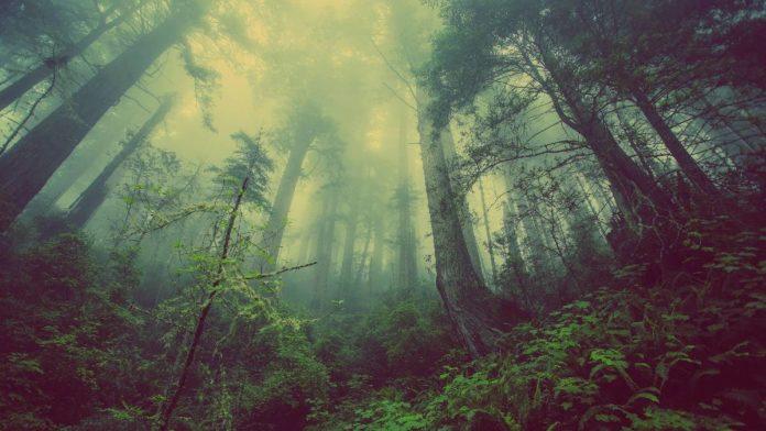 ¿Una radio de los bosques del mundo? Así es Tree.fm