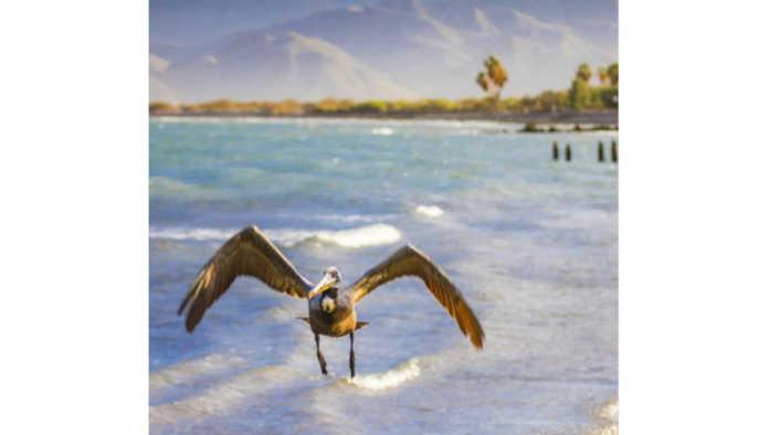 Avistamiento de aves en Baja California Sur