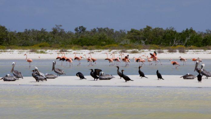 Mantarrayas, aves y tortugas, los nuevos visitantes de Holbox