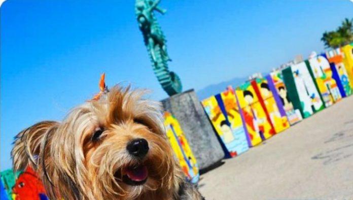 Puerto Vallarta, destino ideal para viajar en compañía de tu mascota
