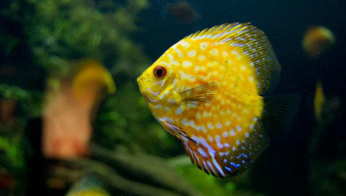 Acuario Michin: diversión marina sin límites