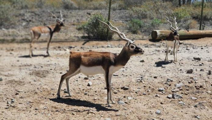 Aprende y diviértete en el Centro Ecológico de Sonora
