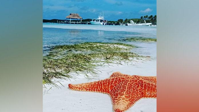 Isla Contoy una joya más de la Riviera Maya