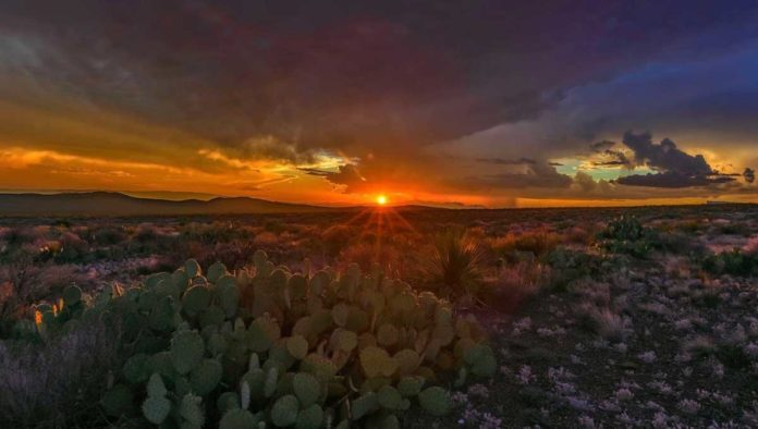 Conoce la Reserva de Maderas del Carmen Coahuila, el hogar de bellas especies
