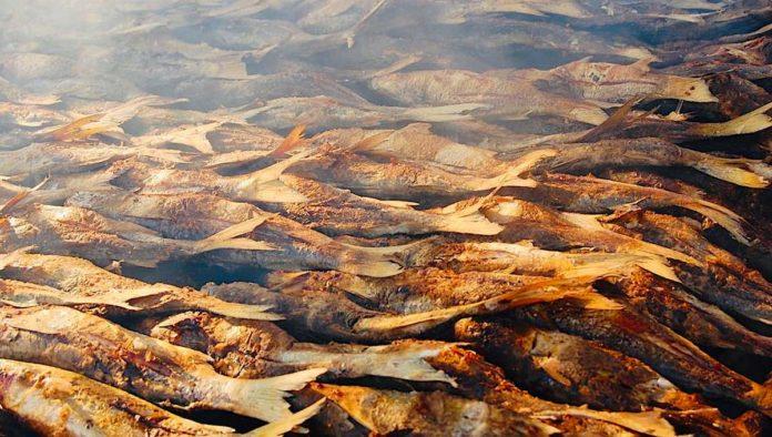 Pescado tatemado, delicia nayarita a fuego lento