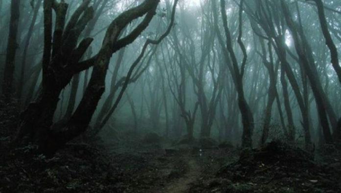 bosque de los suicidios en japón
