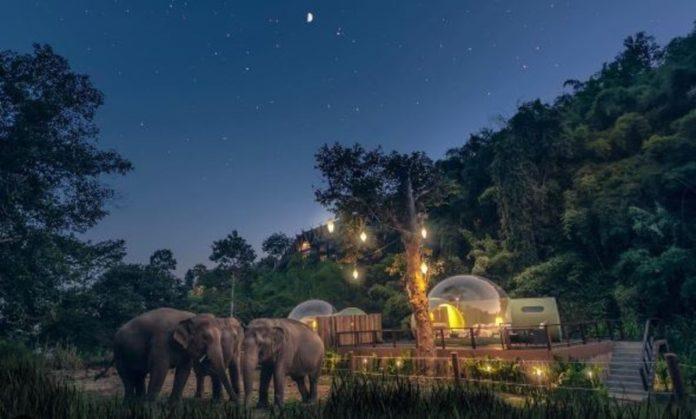 Duerme entre elefantes bajo las estrellas en Tailandia, ¿te atreves?