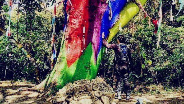 árbol mágico de Michoacán