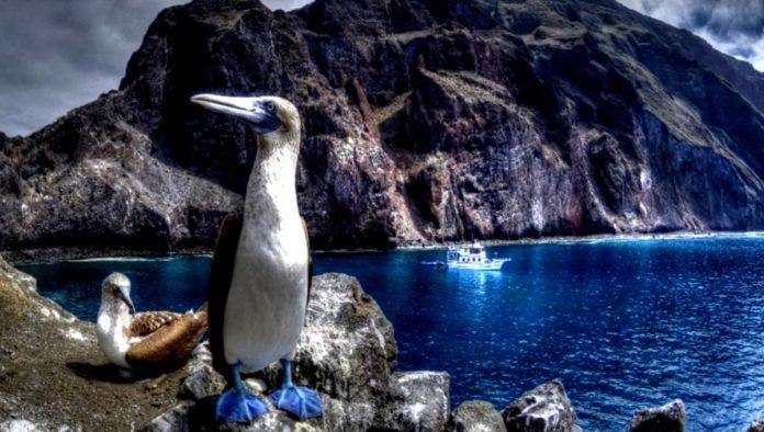 Galápagos: ¿qué hace tan especialmente únicas estas islas de Ecuador?