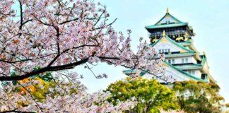 Hanami fiesta de la floración de los cerezos en Japón