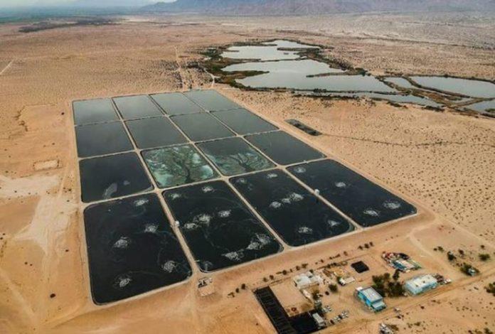 Conoce el humedal artificial que purifica el agua contaminada en Baja California