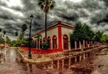Aguacate: el oro verde de México para el mundo