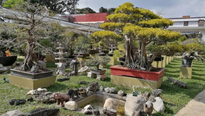 Museo Tatsugoro, la casa para los amantes de los bonsái