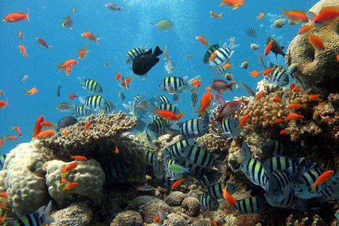 Acuario Mazatlán, un recorrido refrescante por el mundo marino