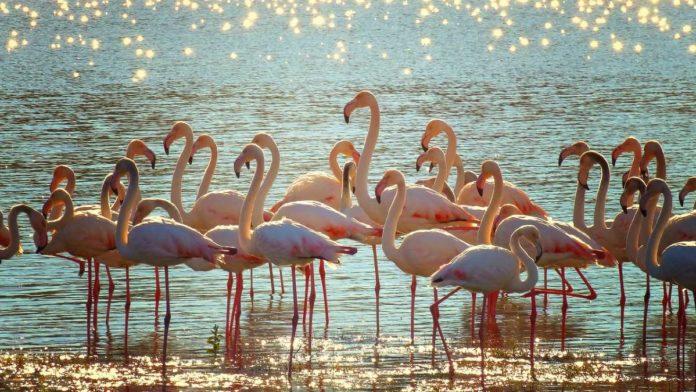 Celestún: un refugio de animales con tintes rosados