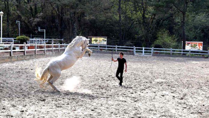 Doma Natural técnica con caballos