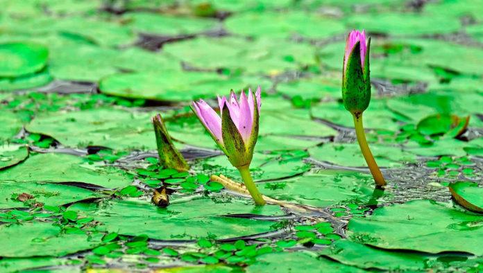 estero palo verde