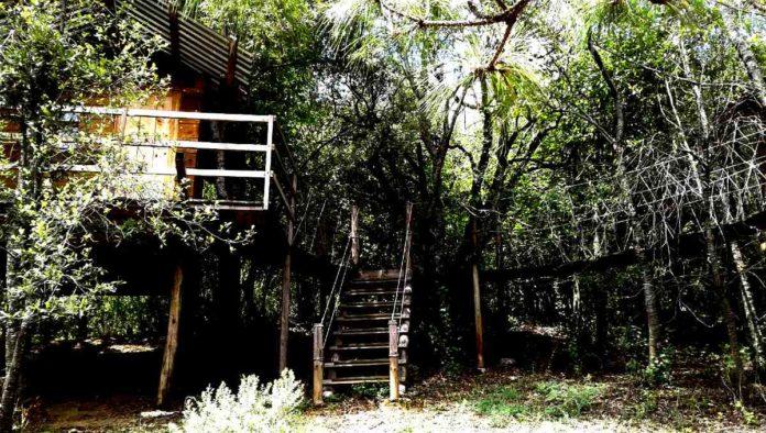 Hidalgo: fin de semana en Parque Sensorial Jardines y Puentes Colgantes