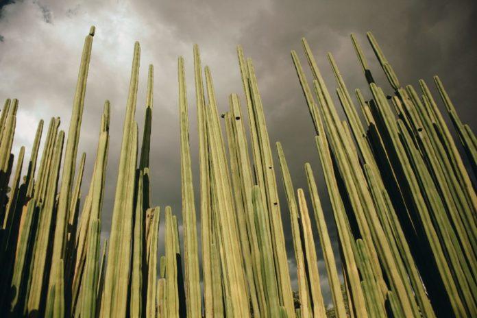 Jardín Etnobotánico de Oaxaca: la armonía perfecta entre el arte y la naturaleza