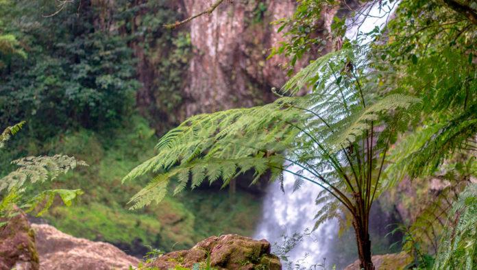 Jonotla donde la aventura y la naturaleza te aguardan