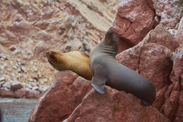 La Lobera, un santuario natural de lobos marinos y focas