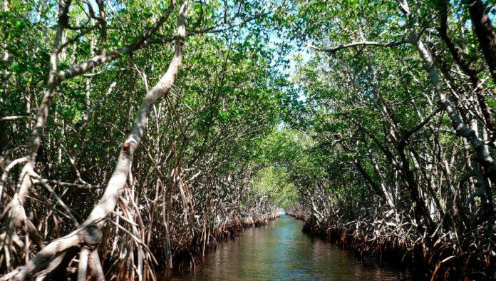 manglares de mandinga