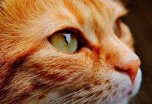 ojo al gato