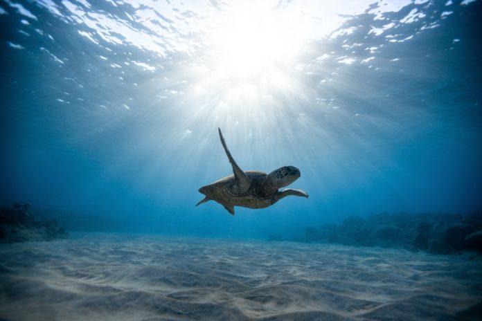 Playa Bamba, una santuario cristalino de tortugas