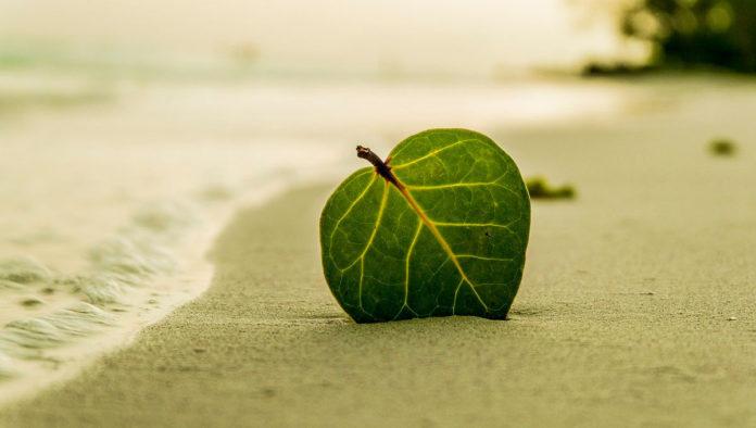 playa La boquilla oaxaca