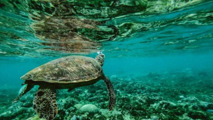 Islas Galápagos tortuga