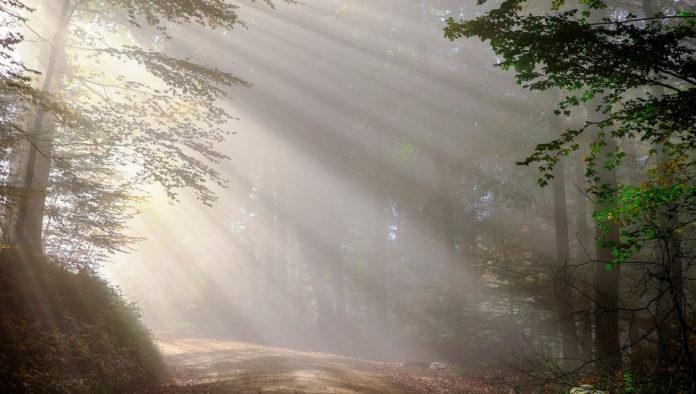 Bosque Encantado de Orrius