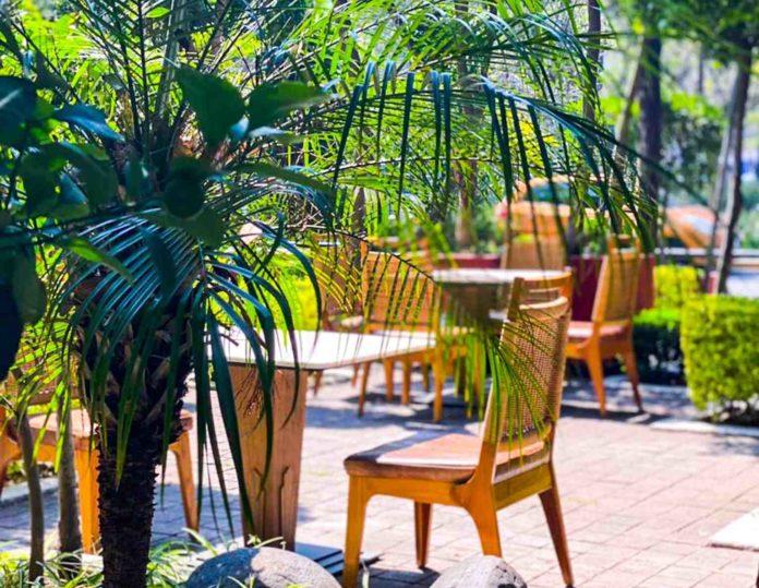 Bosque Gourmet CDMX: un paraíso gastronómico al aire libre