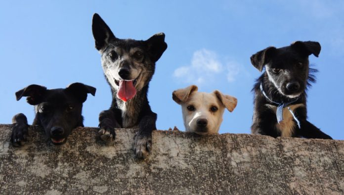 Dogtores