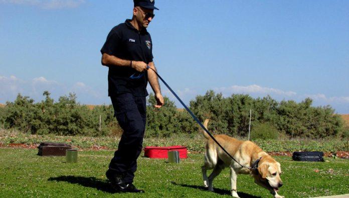 perros podrían detectar Covid-19 estudio