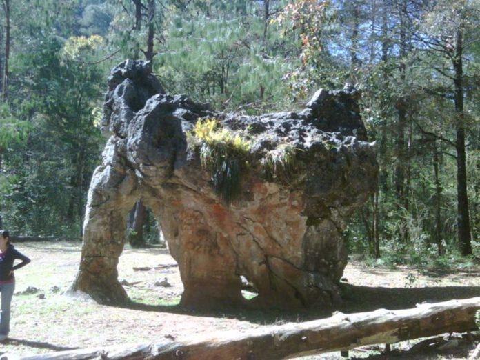 Piedra del Elefante, una joya que estuvo intacta 65 millones de años
