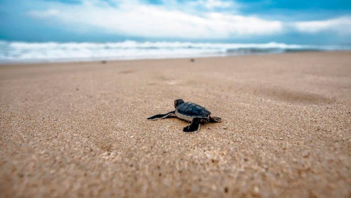 playas con animales