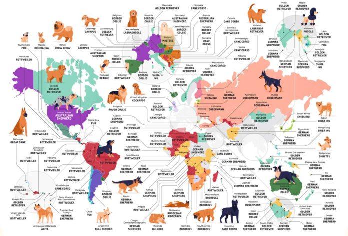 Mapa: las razas de perros más populares en cada país