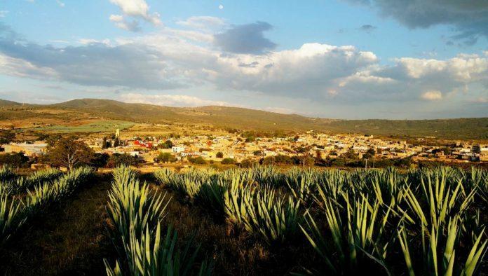 Ruta Cultural del Mezcal Guanajuato