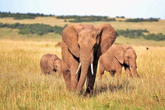 ¿Quieres irte de safari por África? Empresa regala viaje si contestas una pregunta