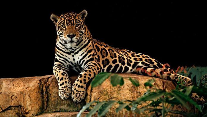 Santuario del Jaguar en Teotihuacán