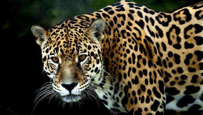 Santuario del Jaguar en Oaxaca