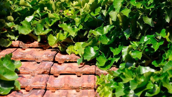 techos verdes chiapas