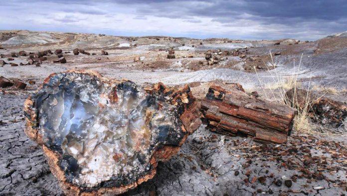 Tesoro de fósiles prehistóricos en Estados Unidos