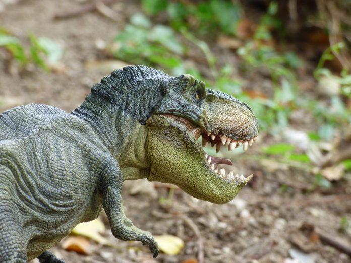 Tiranosaurios cazadores sociales estudio