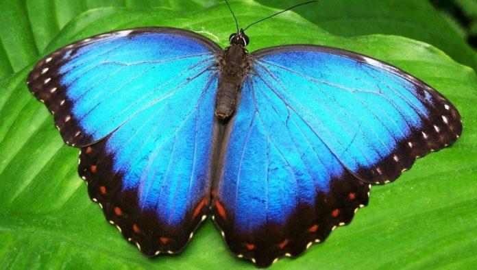 Yee lo Bee, el hábitat más grande para mariposas está en Oaxaca