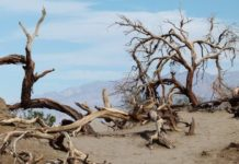 Desierto de Altar