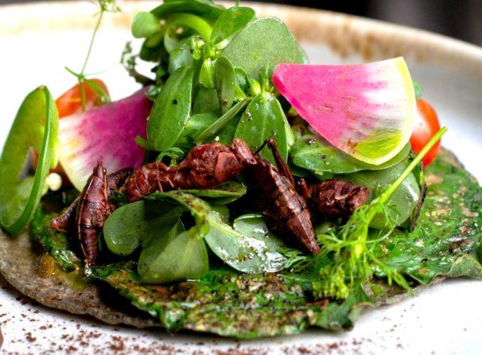 Antolina y su delicioso menú de insectos que debes probar