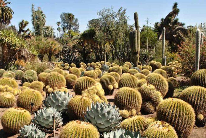 Barranca de Metztitlán, un paraíso de diversidad natural