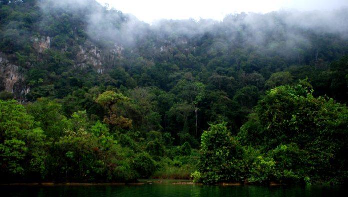 Campamento Tamandua en Chiapas